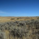 sage on Wolfe Ranchland